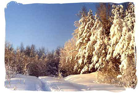 Forest-park protective zone. The Novokavgolovsky forest-park in  winter